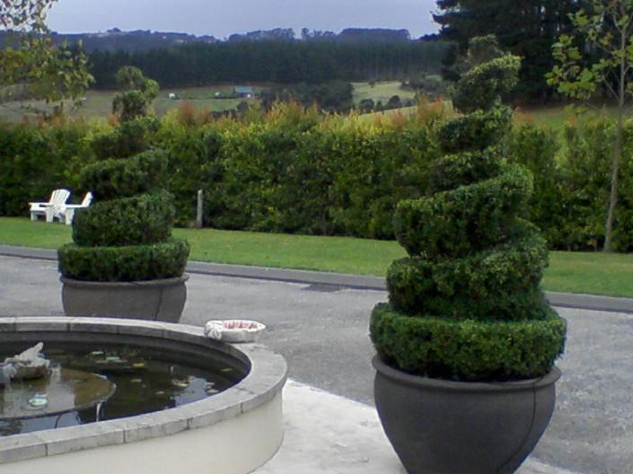 Arborist Auckland