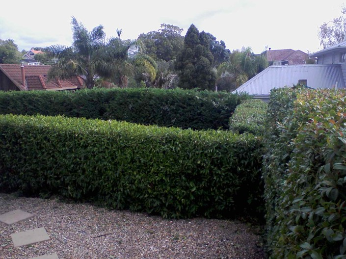 hedge-trimming-705x528