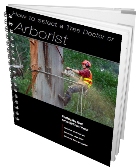 Arborists Auckland Buyers Guide