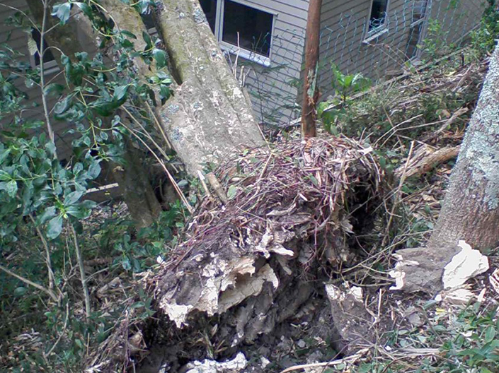 Emergency Tree Removal Auckland