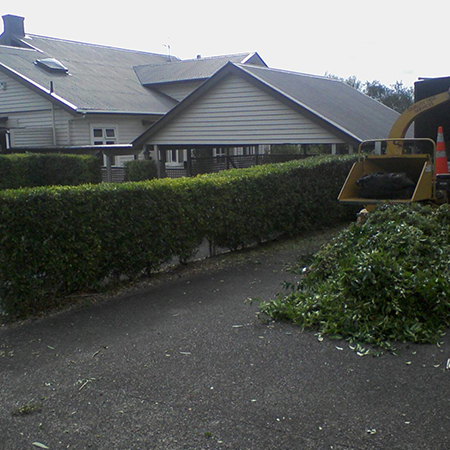 Hedge Shaping Auckland