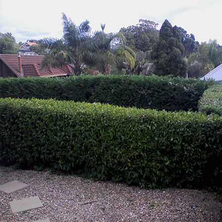 Hedge Trimmer Auckland