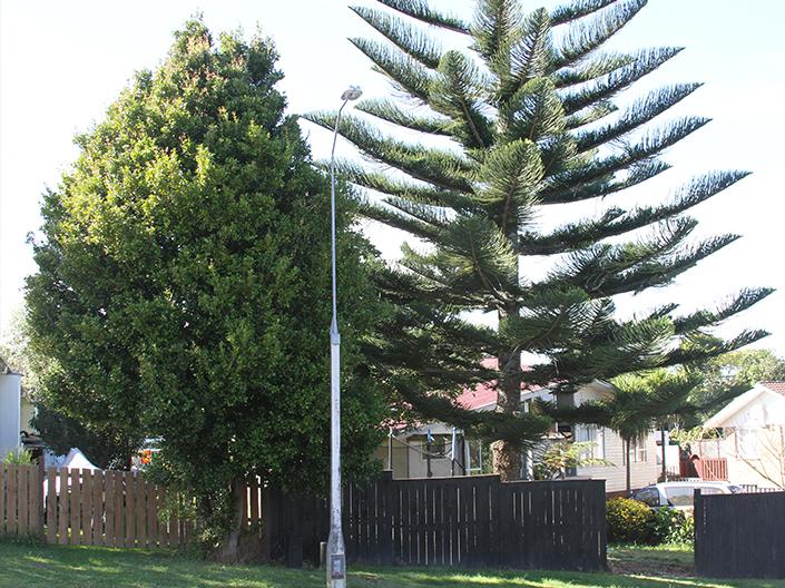 Landscaper Auckland