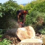 Arborist Auckand